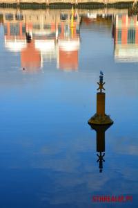 Seagull Belfast