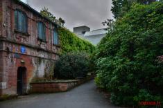 Botanic garden Belfast